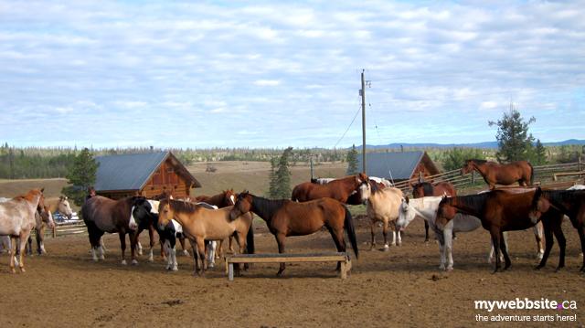 Horses ready to ride at Big Bar Guest Ranch