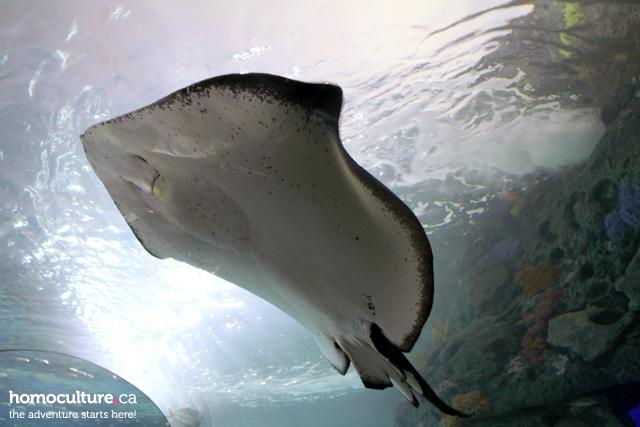 The Dangerous Lagoon at Ripley's Aquarium of Canada