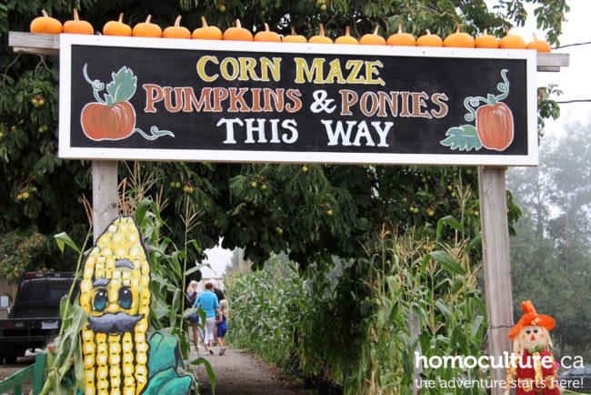 7 reasons you need to go on a farm tour getaway this autumn