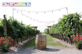 Experience Wine Tours Kelowna